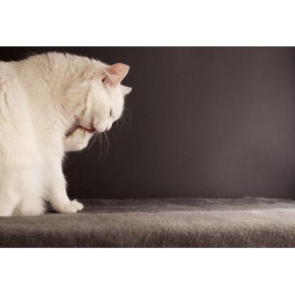 Pour une bonne gestion de la griffe du chat, prendre l'habitude de toiletter son chat….