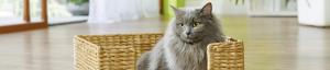 Choyez votre animal grâce à votre magasin pour animaux Maxi Zoo