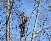 Comment choisir un élagueur pour prendre soin de vos arbres?
