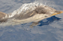 nageaveclesdauphins.com